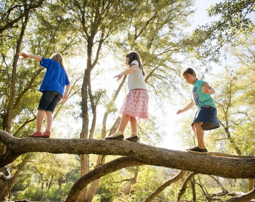Three Children Balancing on a Tree Branch